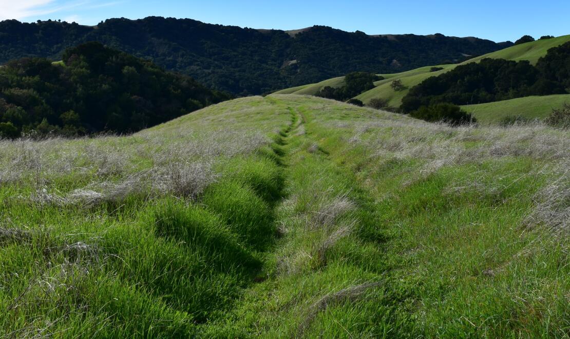pleasanton-ridge-reginal-park77
