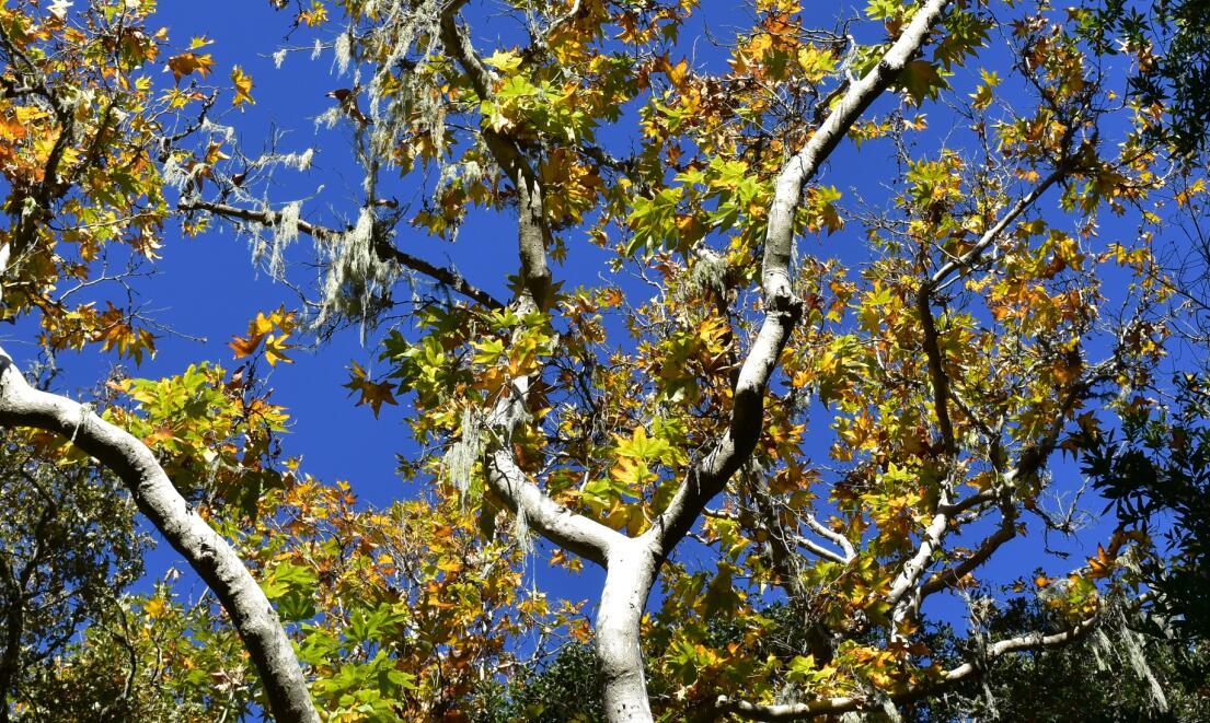pleasanton-ridge-reginal-park96