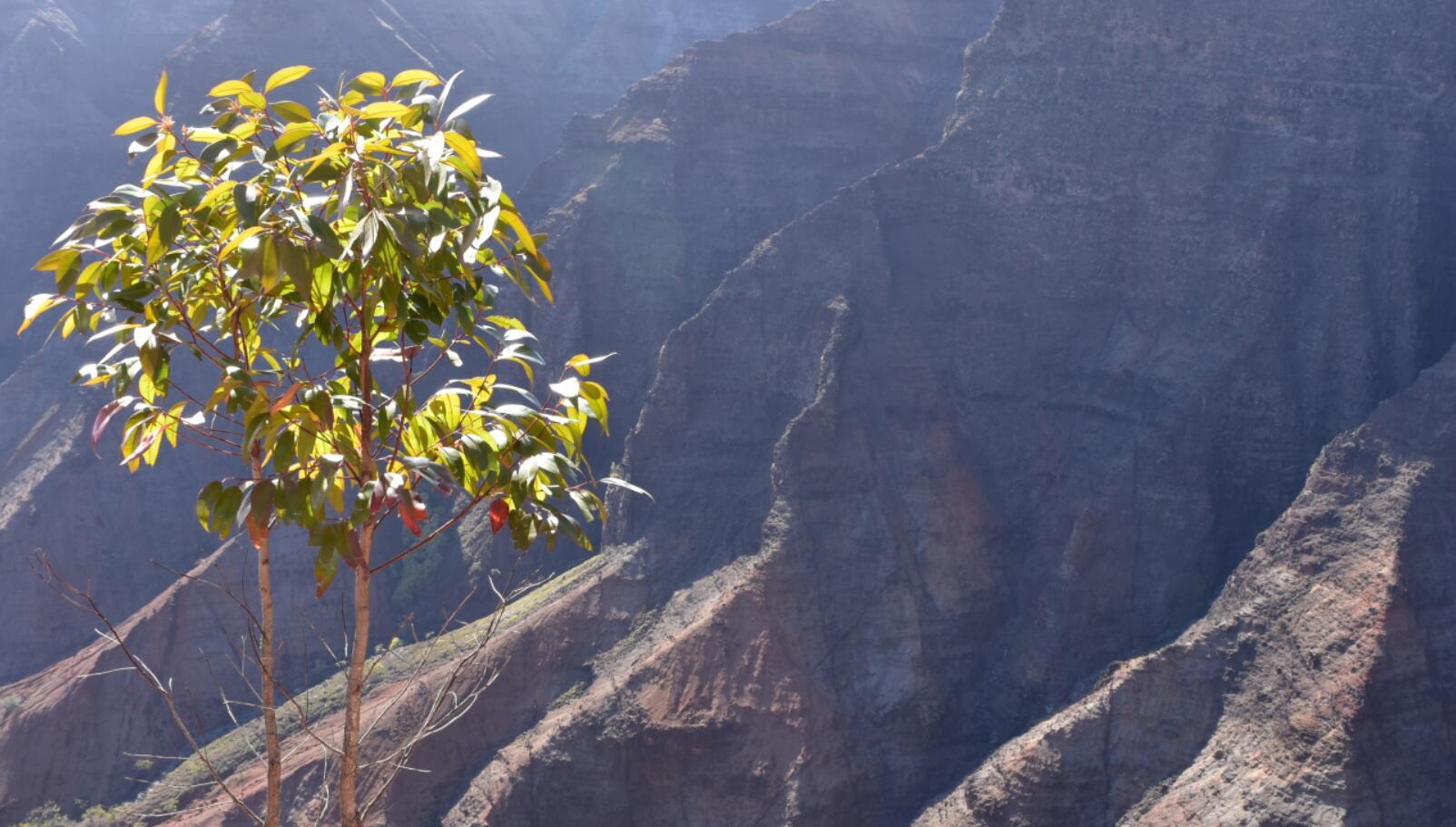 waimea-canyon13_3