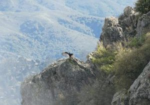 Mt-Tamalpais-East-Peak_condor